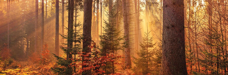 SEEFELDER ist PLANT-MY-TREE Klimaschutzpartner